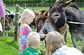 Feeding the Donkey.jpg