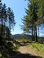 Fernworthy - above the reservoir - April 2015 - panoramio.jpg