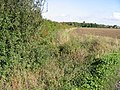 Field boundary along footpath - geograph.org.uk - 962306.jpg