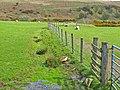 Fields near Cairnerzean - geograph.org.uk - 315284.jpg