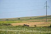 Fields near Suceava, Romania.jpg