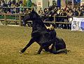 Fieracavalli 2014 - Cavallo Romano6.jpg