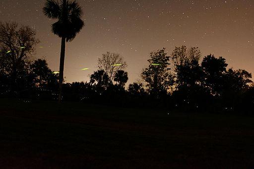 Fireflies, Georgia, US, April 20, 2017