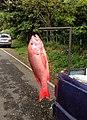 Fish Monger display.jpg