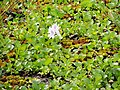 Flôres Parque Municipal Itatiba. - panoramio.jpg