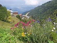 Fleurs de montagne près du hameau de Celliers (La Léchère) sur la route du col de la Madeleine