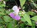 Fleurs au jardin agronomique tropical 2.JPG