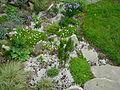 Flickr - brewbooks - Our little rock garden.jpg