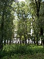 Floodplain forest on the Primate's Island, Esztergom, Hungary.jpg