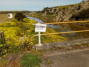 Florecillas amarillas sobre el puente.jpg