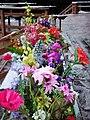 Flower Bed 花床 - panoramio.jpg