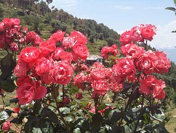 Flower Valley in Dalhousie 01.jpg