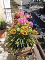 Flowers in Rome10.JPG