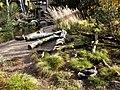 Flussuferläufer und Eurasische Schellente (Zoo Dresden).jpg