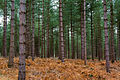 Forest (6695873463).jpg