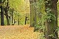 Forest 66.jpg