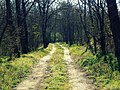 Forest Road (200922881).jpeg