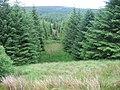 Forest break towards Prickeny Burn - geograph.org.uk - 873875.jpg