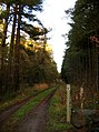 Forest track - geograph.org.uk - 94965.jpg