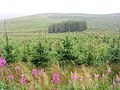 Forestry at Hill Head - geograph.org.uk - 535289.jpg