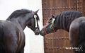 Fotografias-de-caballos.jpg