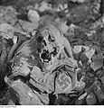 Fotothek df ps 0000080 Totenkopf und Leiche in Uniform (mit Hakenkreuz-Binde am.jpg