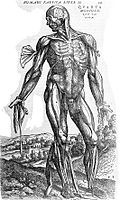 Fourth muscle man, by Vesalius. Wellcome L0001647.jpg