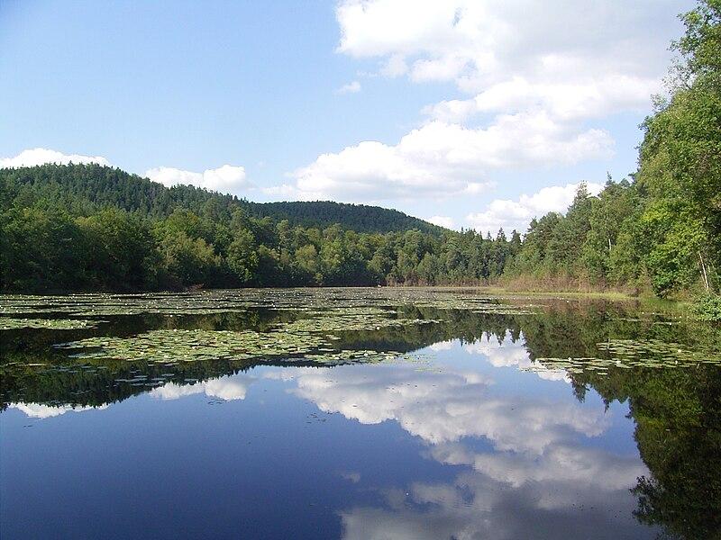 Lieschbach pond, Philippsbourg, Moselle, France