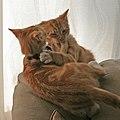 Fred and George 2 (2936107250).jpg