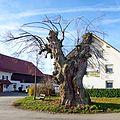 Friedenslinde (Schöneschach) jm9008 jiw.jpg