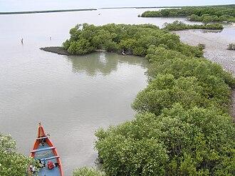 Tiruvarur district - Mangrove Forests, Muthupet