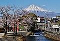 Fujinomiya Fuji-san Sakura 3.jpg