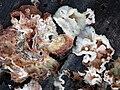 Fungus I 258341807.jpg