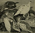 Game birds and shooting-sketches - illustrating the habits, modes of capture, stages of plumage and the hybirds and varieties which occur amongst them (1894) (14565507708).jpg