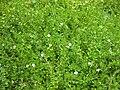 Gardenology.org-IMG 2935 rbgs11jan.jpg