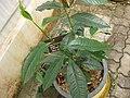 Gardenology.org-IMG 7642 qsbg11mar.jpg