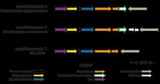 Cyclothiazomycin - Image: Gene Cluster for Cyclothiazomycin Family