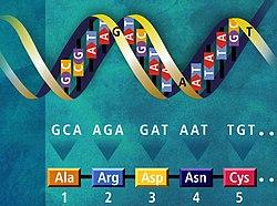 Genetický kód.jpg