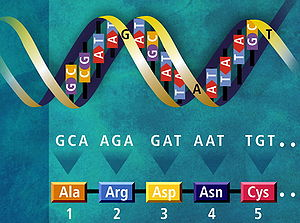 DNA 5 farklı bazdan oluşmuştur.
