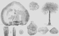 Geology and Mineralogy considered with reference to Natural Theology, plate 63.png