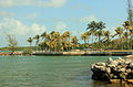 Gfp-florida-keys-marathon-key-trees-on-the-shoreline.jpg