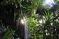 Gfp-st-louis-botanical-gardens-light-shining-on-waterfalls.jpg