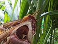 Giant moth 3.jpg