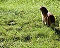 Gillie in the sunshine (3686305283).jpg
