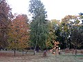 Golden Fall in Kiev 1 - panoramio.jpg