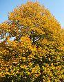 Goldener Oktober - panoramio (4).jpg