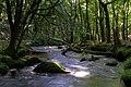 Golitha Falls - geograph.org.uk - 526243.jpg
