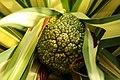 Gradina Botanica (8550157740).jpg
