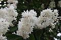"Gradina Botanica ""Vasile Fati"" (4654000344).jpg"