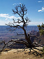 Grand Canyon Walhalla plateau. 16.jpg